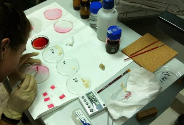 Ensayos de resistencia a hongos de pudrición, realizados en el Laboratorio de Microbiología de AIDIMME