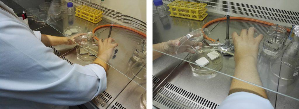 Preparación del ensayo de caracterización antimicrobiana frente a bacterias en dos sustratos de ensayo diferentes. AIDIMME