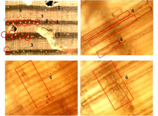Imagen 1. Fotografías tomadas de los planos transversal, radial y tangencial de una muestra de pino silvestre. Proyecto MEND-ME