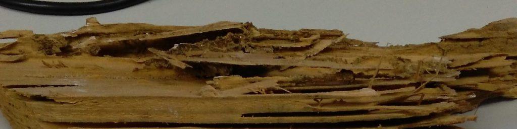 Fotografía 4. Madera degradada por termitas.